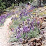 flower-trail-1