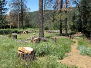 Horn Canyon to Pines Trail Camp