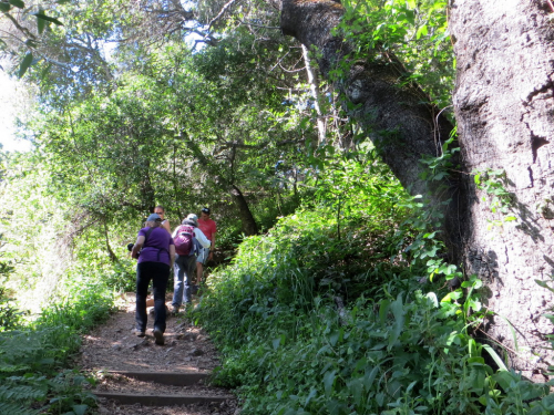Big Sur DAY 1 by LCW - 04-24-19 (4)
