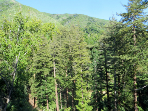 Big Sur DAY 1 by LCW - 04-24-19 (6)